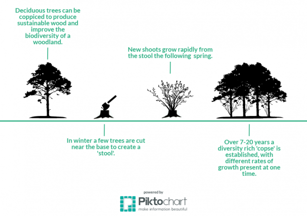 Infographic desciribing the process of coppicing woodland