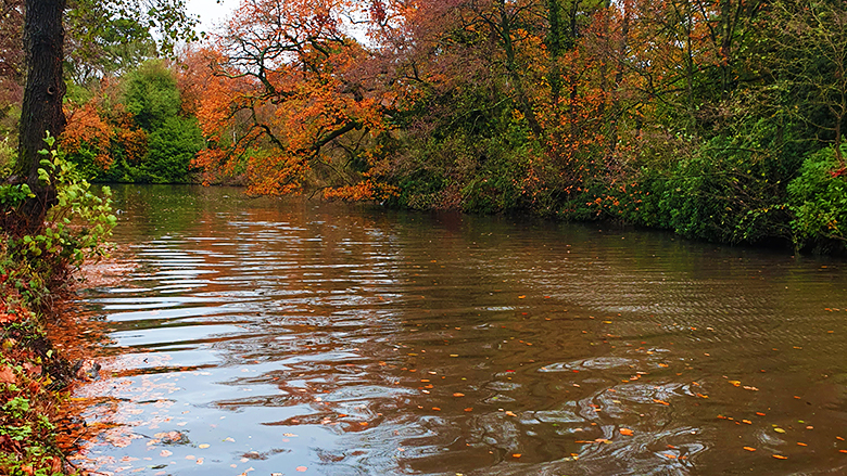 Small stream near Roath Park