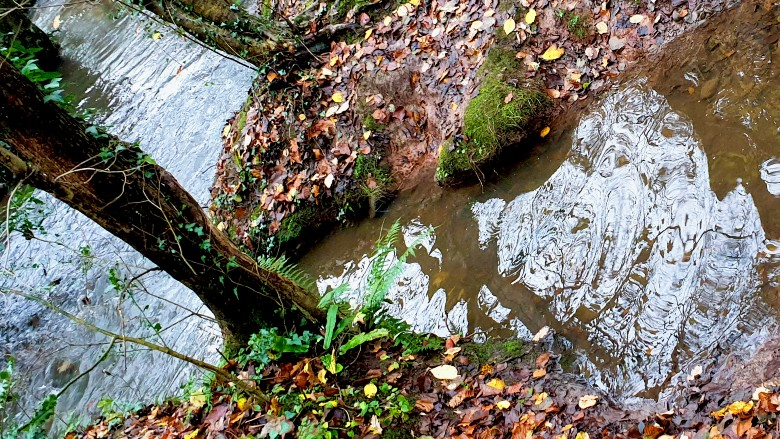 stream with water and leaves
