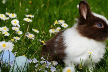 Easter-egg hunt credit: pexels by pixabay